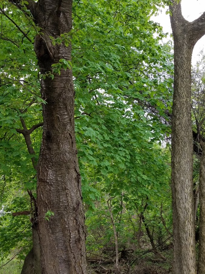 treespic