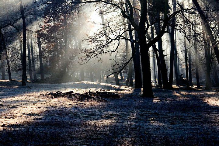 forestdarklightpic