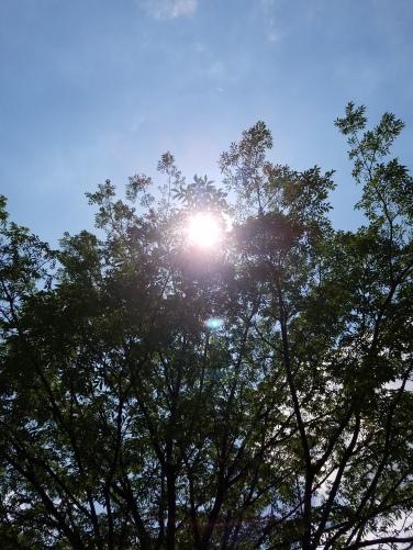sunlightpic