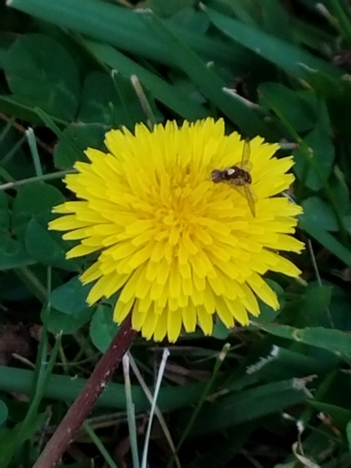 yellowflowerbugpic