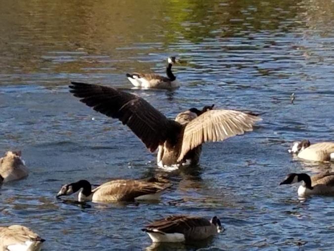 duckwingsuppic