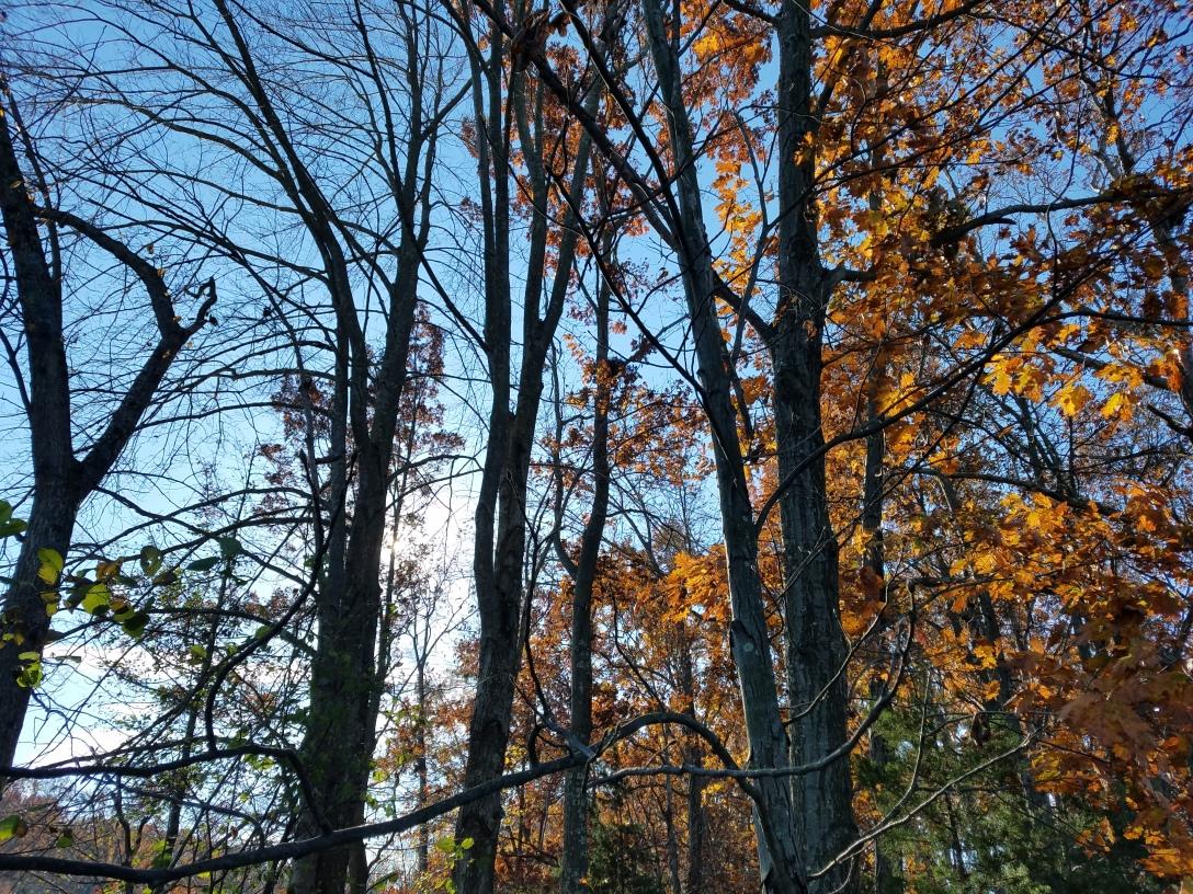 forestsky