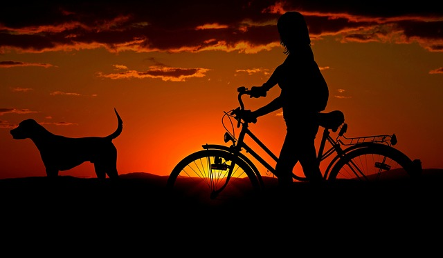 walkdog