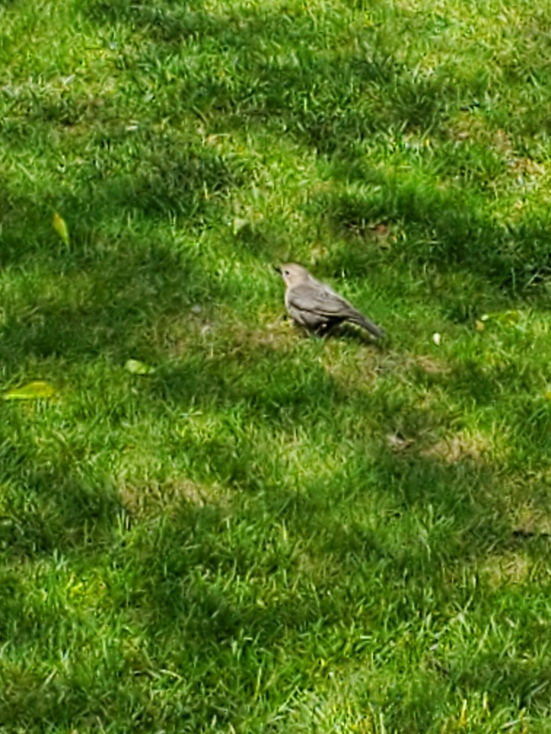birdnotalone