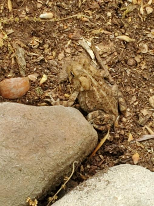 frogblend