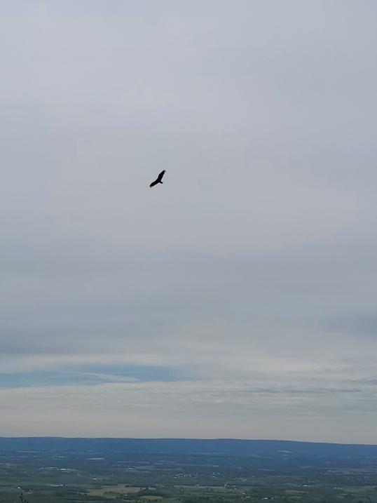 loookbird