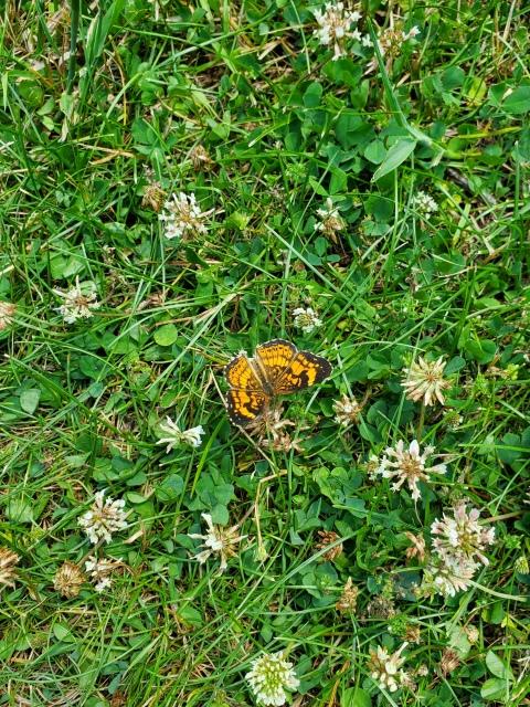 butterflyyel