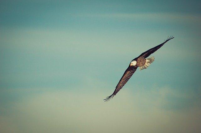 eagle-1029908_640